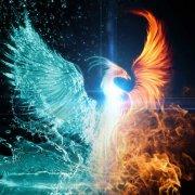avatar de Phoenix73